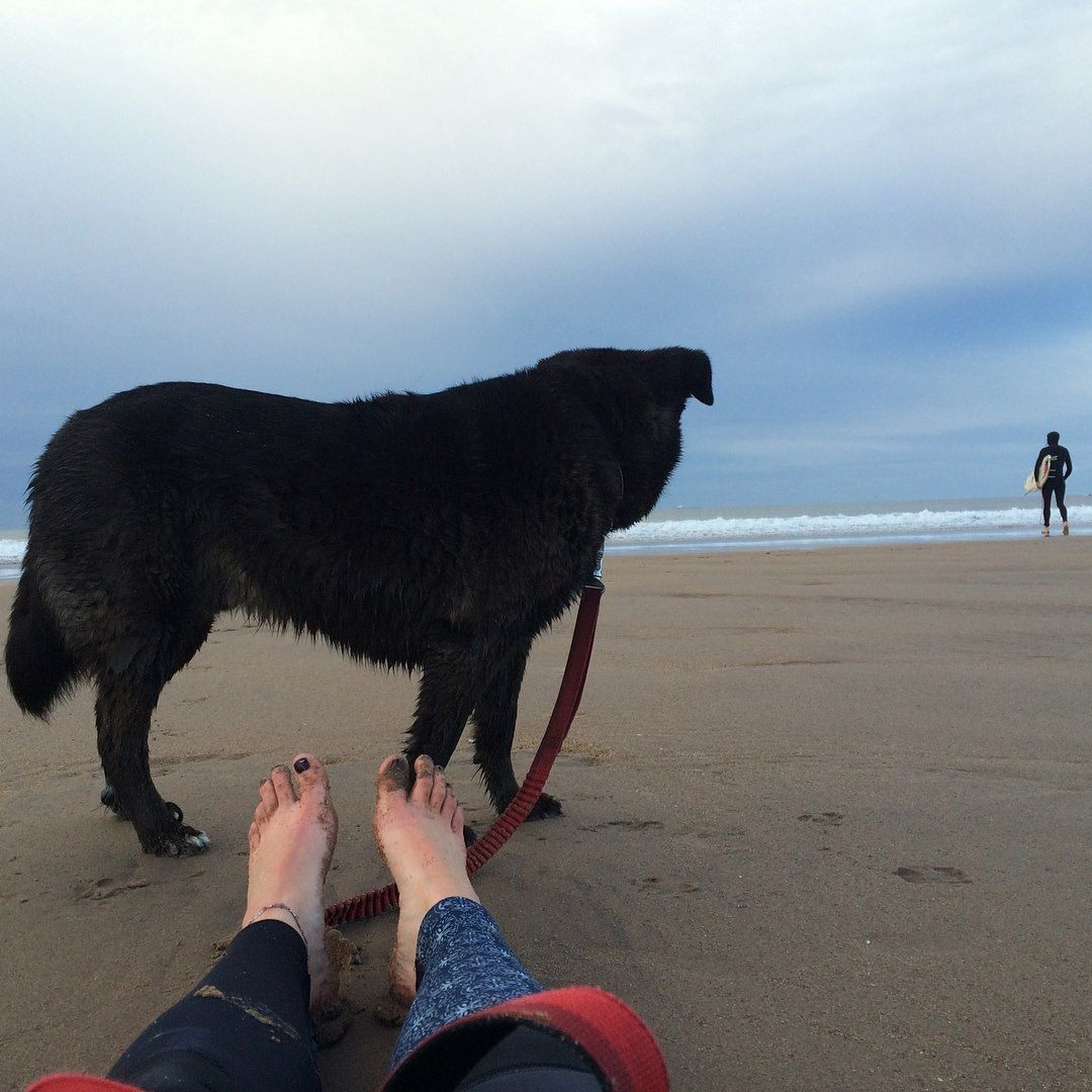 Outdoor Surf with Dog