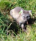 The Arctic Fox - Recently tagged